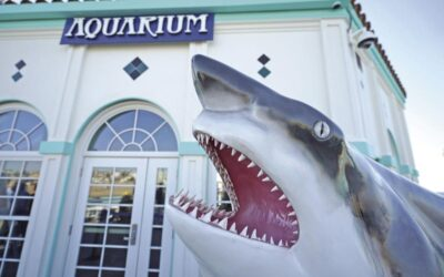 Roundhouse Aquarium in Manhattan Beach to Reopen with Safety Protocols
