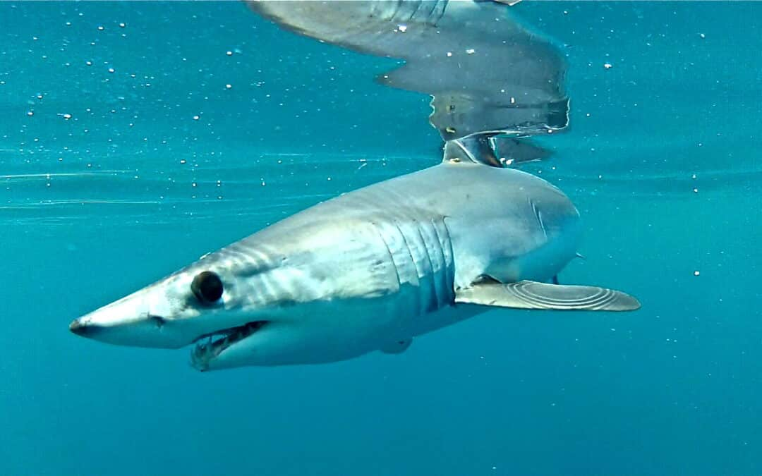 Virtual Marine Science Series: The Shark Reality