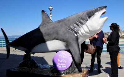 Meet Manny the Great White Shark Outside the Roundhouse Aquarium